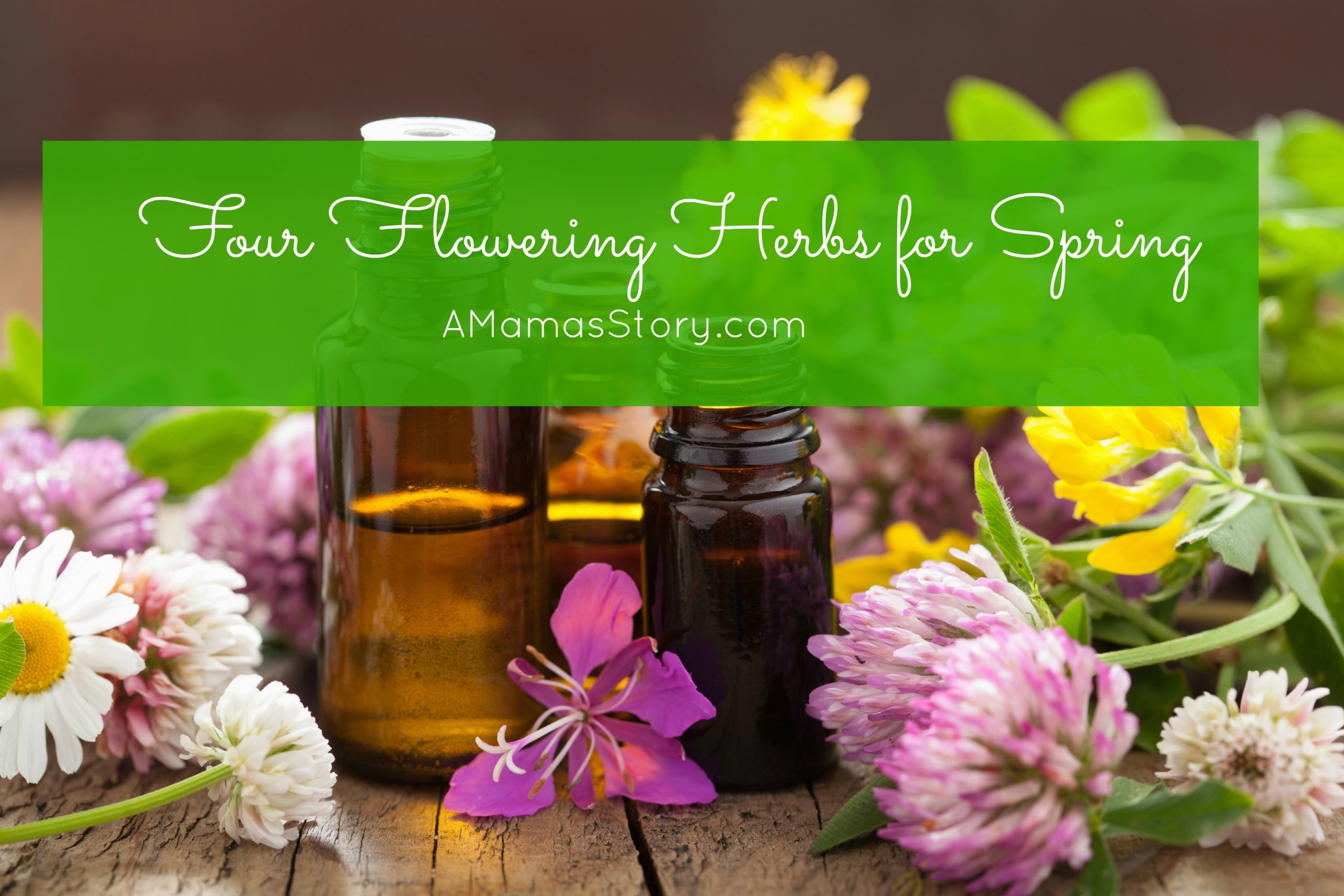 Four Essential Flowering Herbs for Spring