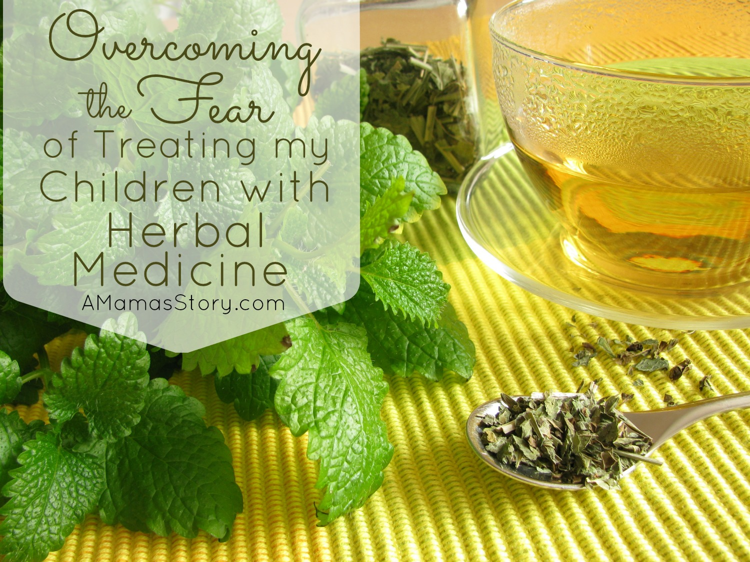 Overcoming the Fear of Treating My Children With Herbal Medicine