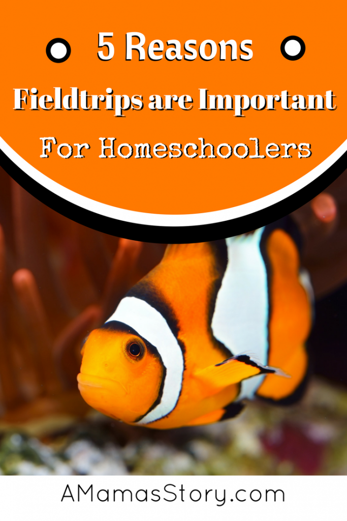 field trips are important for homeschoolers