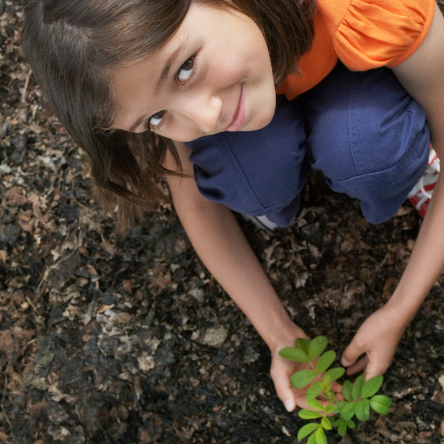 6 Plants Perfect for Kids to Grow