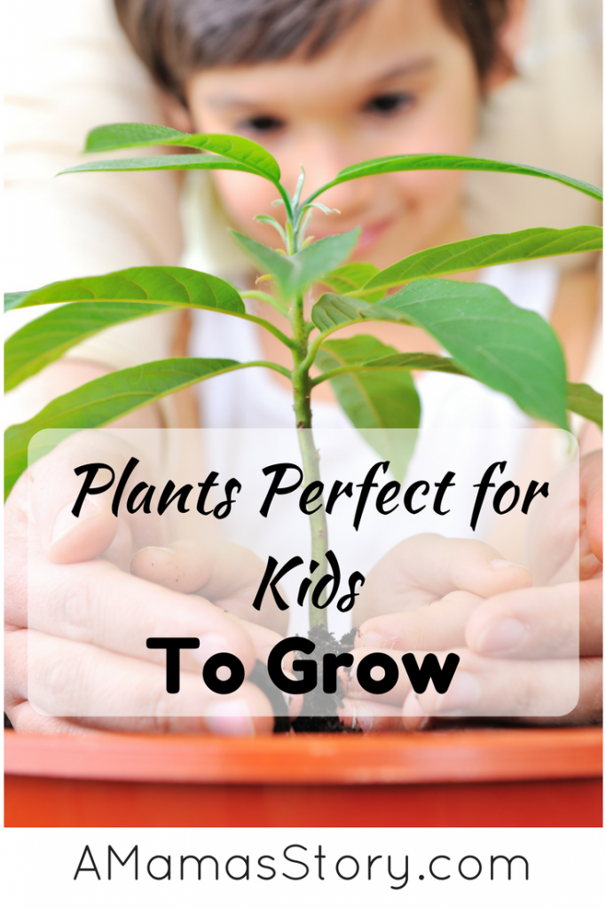 plants perfect for kids to grow