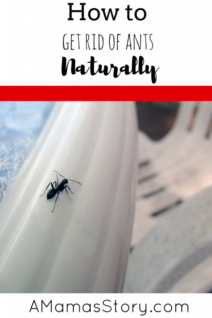 rid of ants naturally