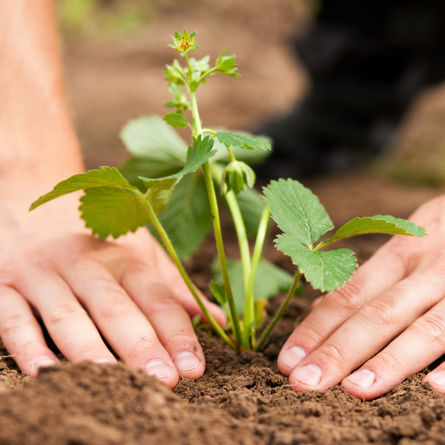 8 Tips to Growing a Better Home Garden