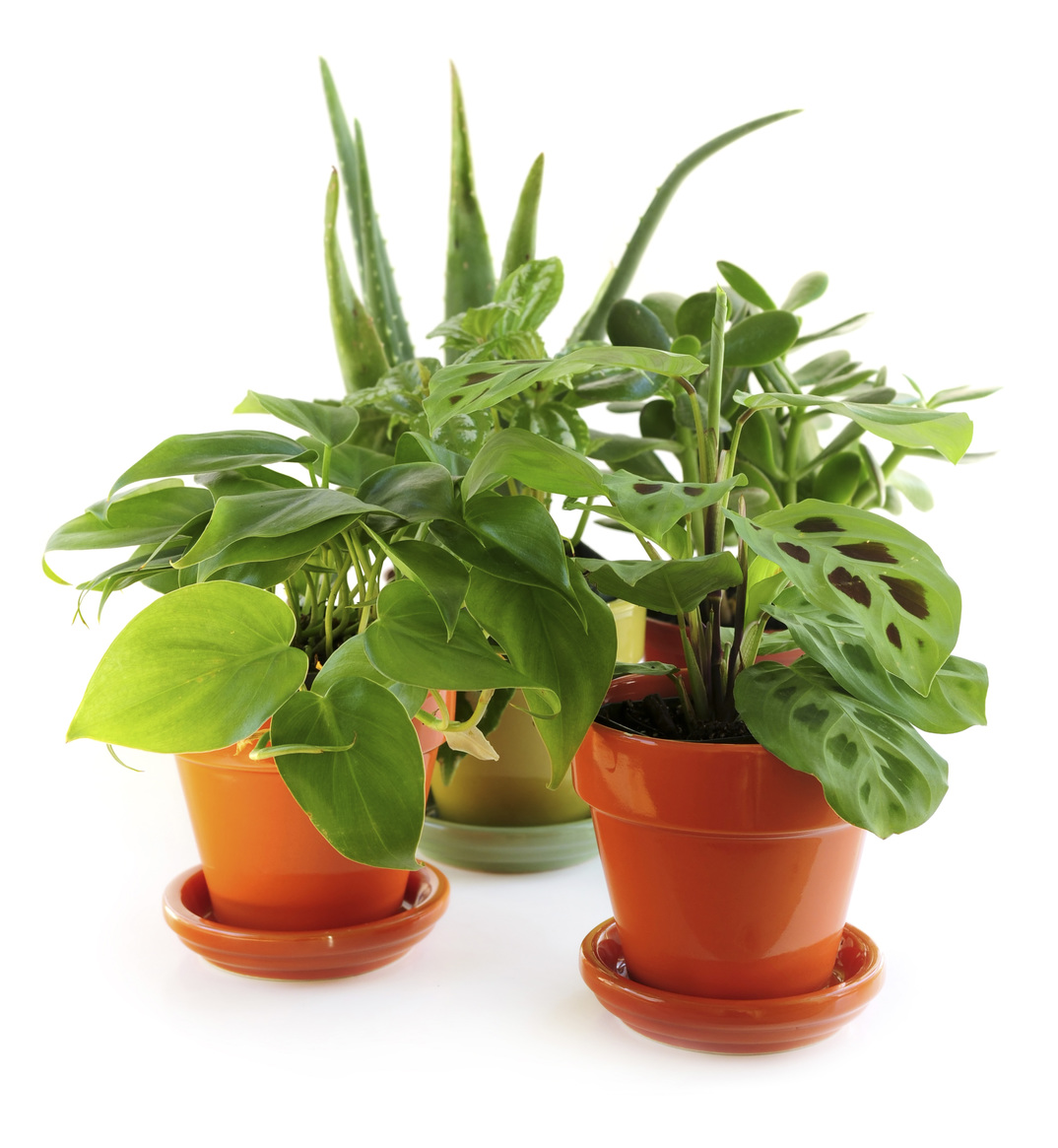 3 Indoor Plants To Purify The Air