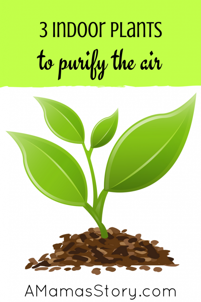 Many people don't realize how many toxins are in their own homes. You can help remedy this issue with these 3 indoor plants that purify the air.