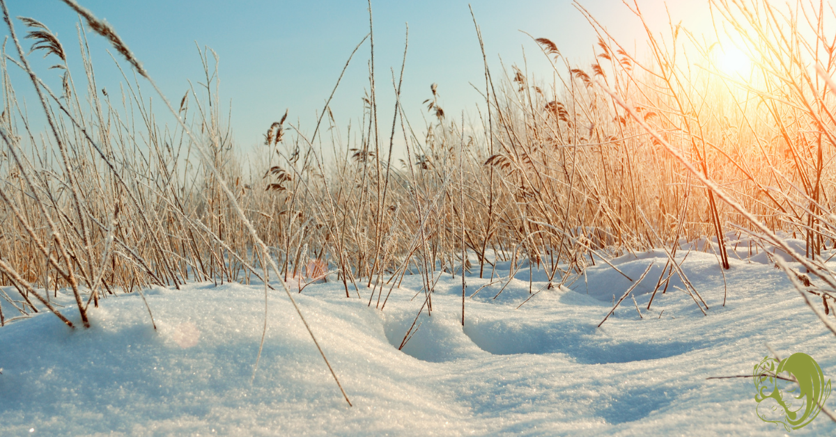 Field of snow, perfect for winter nature study.